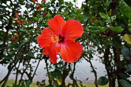 jardines flores: jardines de flores rojas Foto de archivo