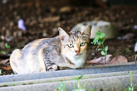 gray cat: gray cat village