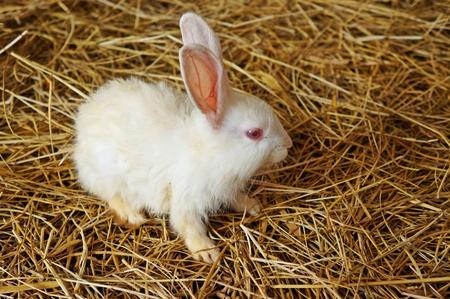 furry animals: animales peludos