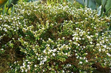 floret: floret Flowers