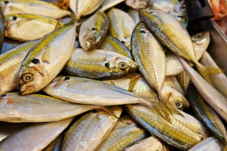 sources: sources of protein fish