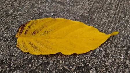 A yellow leaf on a tar road Stock fotó
