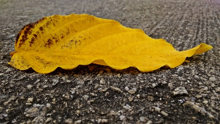 A leaf on a tar road Stock fotó