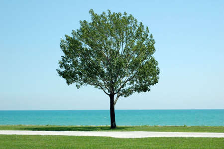 eenzame boom op lake shore Stockfoto