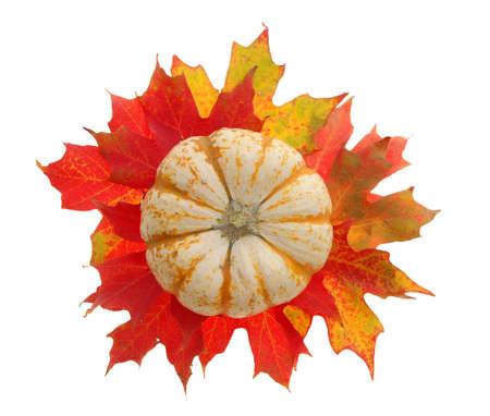 pumpkin and maple leaf Stok Fotoğraf