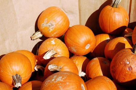 pumpkins under sunshining