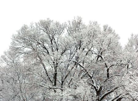 snow on tree in winter time