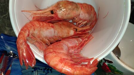 Large comb prawns of botan  Crested big shrimps  Three shrimps  Boiled seafood  Ready-made delicacy dish Stock Photo