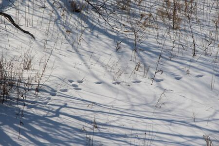 Clear winter day in the forest  Footprints in the snow  Shadows in the snow Banco de Imagens