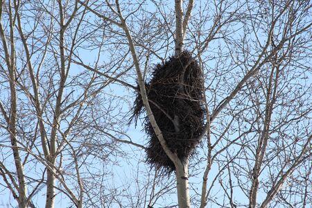 Big bird nest on a tree / Bird`s nest on a blue sky background