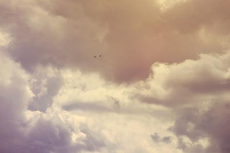 Clouds in the evening sky / Sunset sky / Flight of a bird