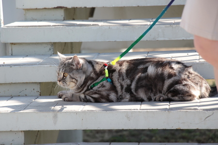 A beautiful tabby cat  Home cat sits on the stairs  Cat in the sun