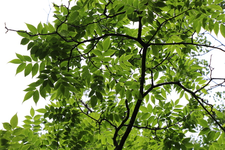 Green leaves against the sky  Background image  Tree branches with leaves on a bright background Banco de Imagens