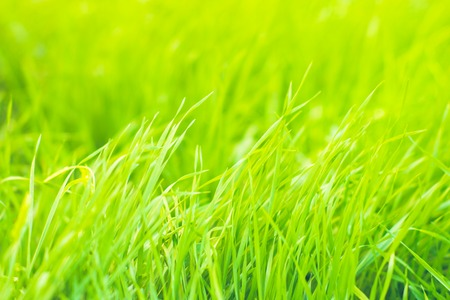 Green grass natural background texture, Stock Photo