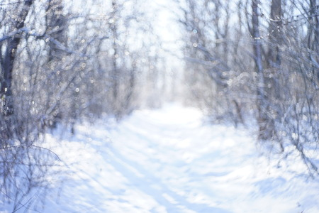 blurred background of forest in the snow in winter