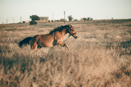 the horse gallops across the field Imagens