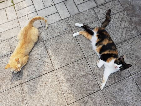 Two cats lie on a stone tile floor, view from above, summer rest of animals outdoors