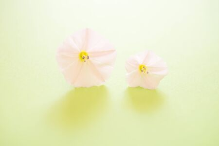 Two small opened bud tender flowers on the lime green paper, SPA day