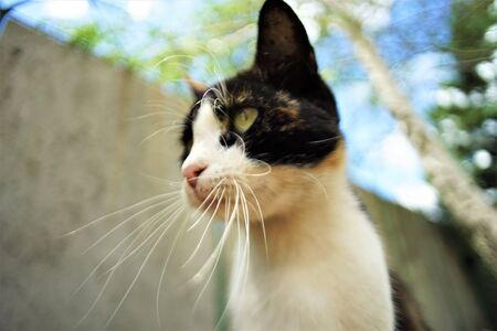 funny tricolor cat face, blue sky and tree background, bottom view. 스톡 콘텐츠 - 132085035