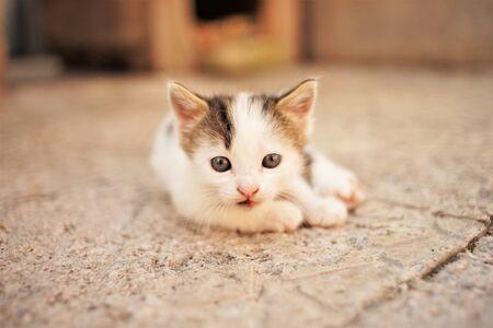 White little kitten lies on a stone floor, cute kitty closeup portrait. 스톡 콘텐츠 - 132083488