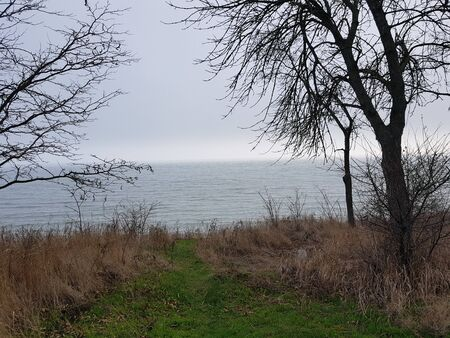 grass and bare trees grow on a hill above the sea, foggy sky, seascape in autumn sunny day.