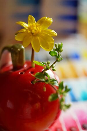 small yellow flower and green sprout in a red vase, macro photo, selective focus.
