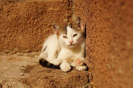 sleepy white kitten lies on stone sunny steps outdoors 스톡 콘텐츠 - 132083885