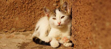 sleepy white kitten lies on stone sunny floor outdoors 스톡 콘텐츠 - 132084254