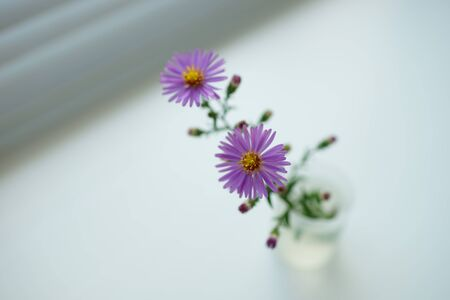 two delicate little purple flower in a vase on light blurred room. Stock Photo