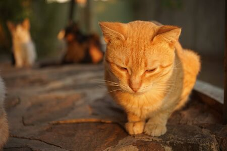 cat relax on the stone floor outdoor, sunset light 스톡 콘텐츠 - 132084952
