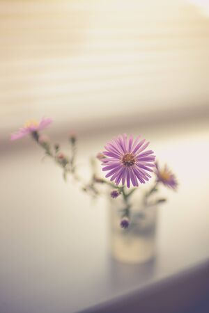 A small bouquet of delicate purple chrysanthemums. Flowers on the windowsill Stok Fotoğraf