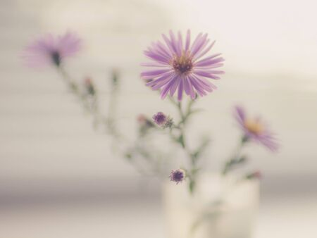 blurred background with a small bouquet of delicate purple chrysanthemums on a light background