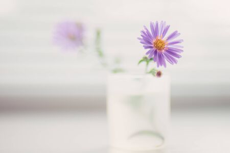 tender little violet flowers in a small vase on a white blurred windowsill. Stok Fotoğraf