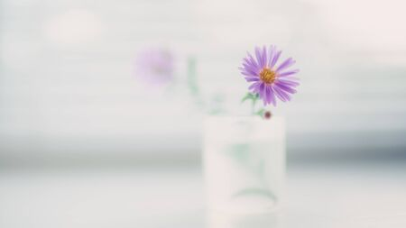 little violet flower chrysanthemum in a small vase on a light blurry table