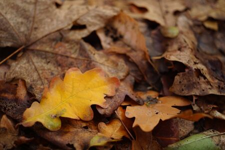 Autumnal leaves in the forest. Autumn natural background