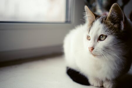 White kitten resting on the windowsill and looking out the window Imagens
