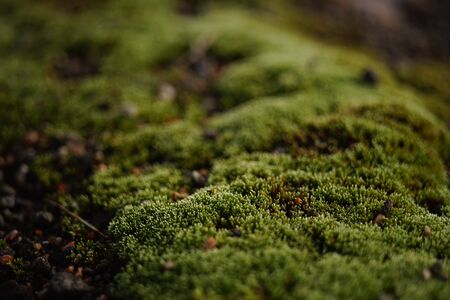 Glade with fresh green moss, close-up