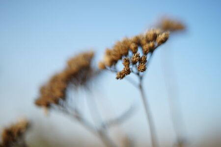 Dry wildflowers grow in autumn field closeup
