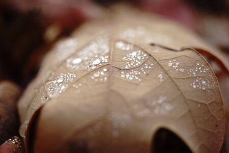 Rain drops on autumn leaf, macro image