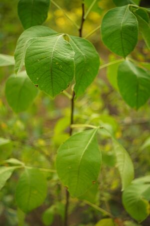 Fresh green leaves grow in the forest, soft selective focus Imagens