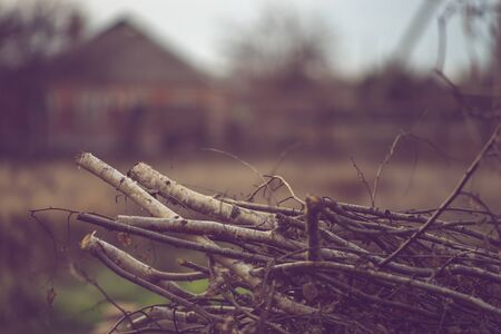 Pile dry sawn birch branches in the garden for fire or heating