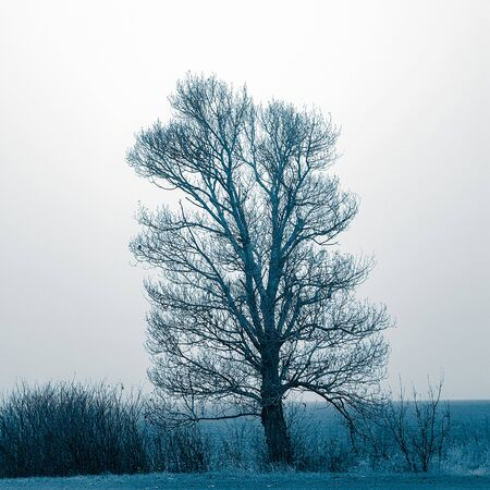 Big bare tree and bushes grow in blue winter field 스톡 콘텐츠
