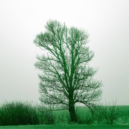 Big bare tree and bushes grow in field, green tone