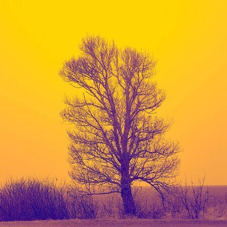 Big bare tree and bushes grow in field, orange tone