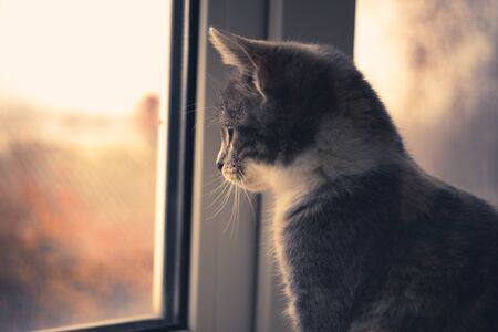 Grey kitten sits on a windowsill and looks at the sky on an autumn day