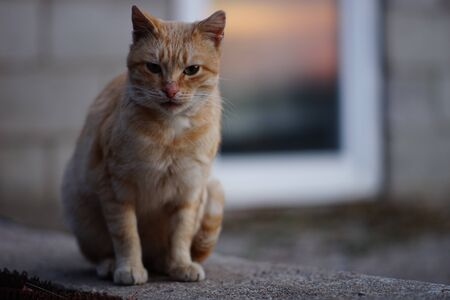Homeless red cat sits on a concrete slab against the background of a glass door with a reflection of sunset