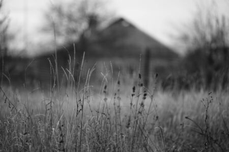 Autumn landscape with dry grass and rural house, bw photo