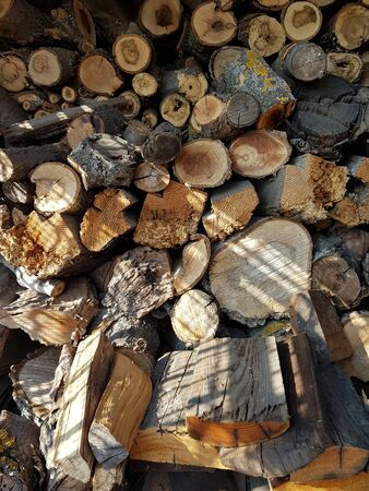 Warehouse logs of different types of wood harvested for the winter