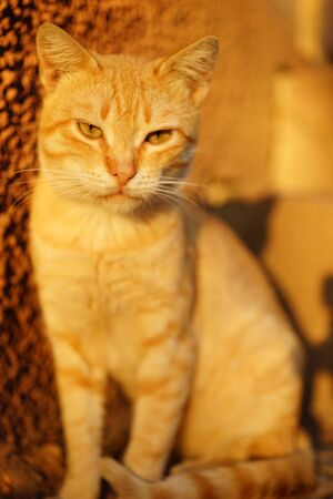 Ginger cat sitting in the sunny yard. Relaxing pet portrait on the stone floor 스톡 콘텐츠