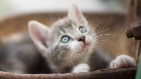 Portrait of a cute little kitty outdoors, domestic lovely cat, charming playfull baby animal, cat plays in a rusty bowl
